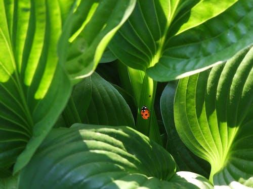 Безкоштовне стокове фото на тему «Beetle, завод, зелений, комаха»