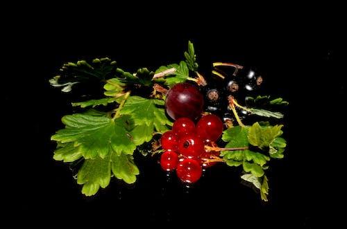 Ảnh lưu trữ miễn phí về blackcurrant, cận cảnh, cây phúc bồn tử, dinh dưỡng