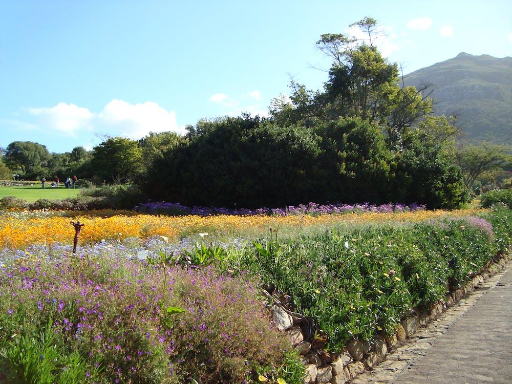 Free stock photo of botanical gardens, flowers, mountain