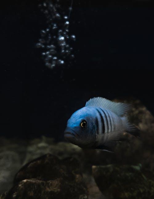 Photos gratuites de bleu, eau, poisson