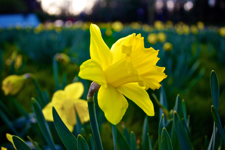 blossom, field, flower