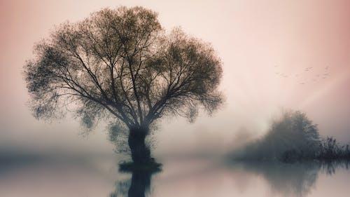 Бесплатное стоковое фото с ветвь, дерево, закат