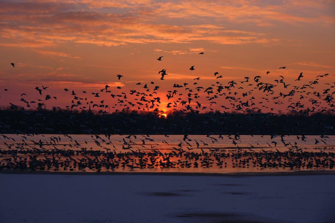 Lago Manyara, Tanzania, Africa, Aves, flamencos, atardecer, amanecer