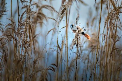 Imagine de stoc gratuită din aviar, coadă, colorat