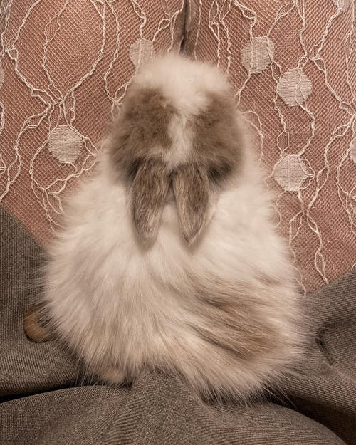 Fluffy bunny sitting on legs of crop owner