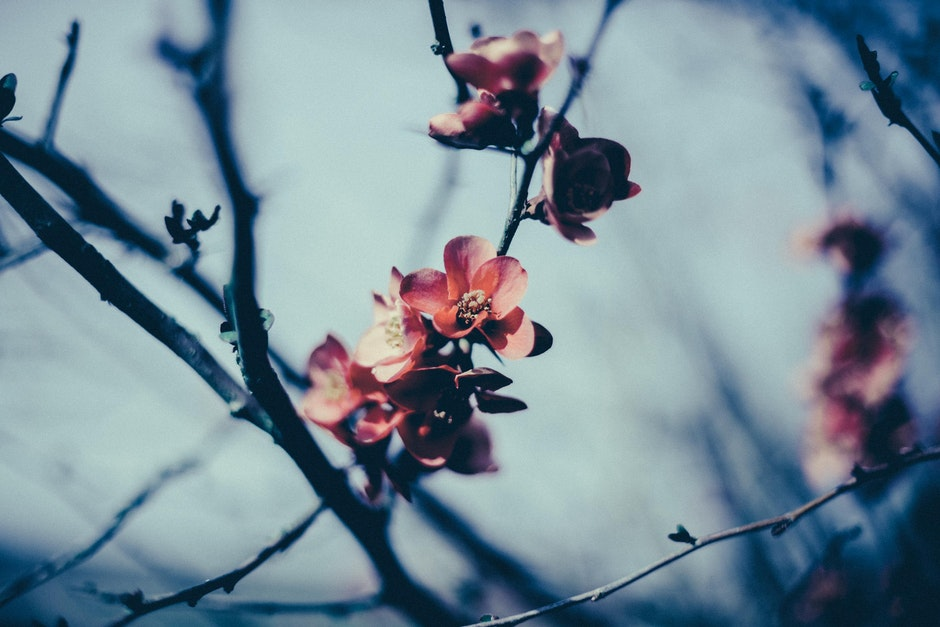 blossoms, flowers