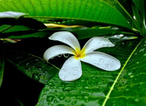 Ingyenes stockfotó béke, Békés, eső után témában