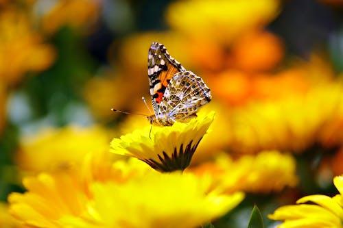 Darmowe zdjęcie z galerii z kwiaty, makro, motyl, natura