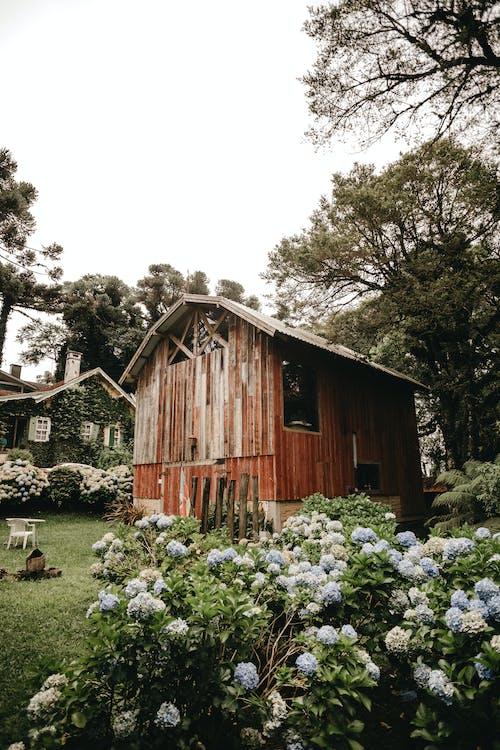 Shabby wooden hut in lush park