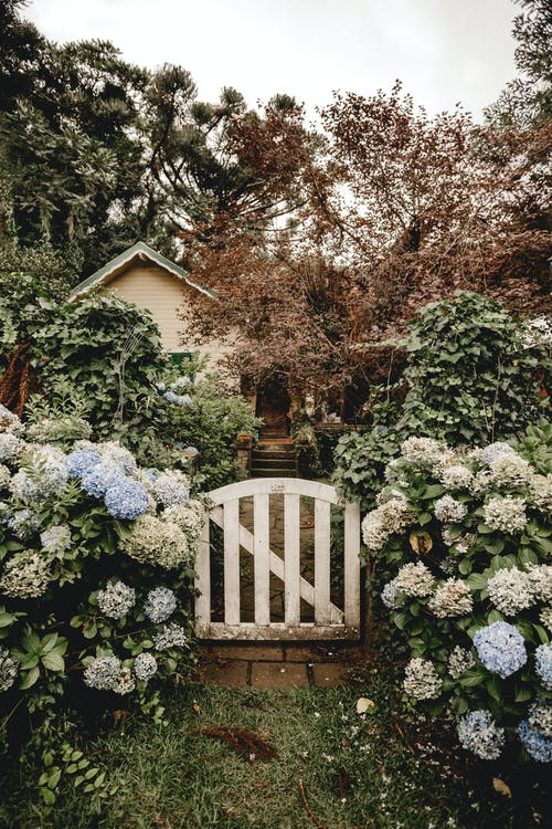Rural garden wicket gate surrounded by blooming flowers