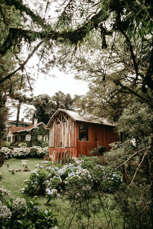 Rural backyard with weathered wooden shack surrounded by lush greenery