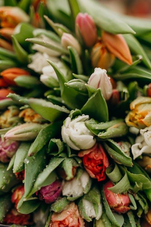 Darmowe zdjęcie z galerii z bukiet kwiatów, bukiety kwiatowe, chili