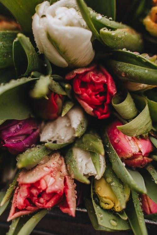 Darmowe zdjęcie z galerii z bukiet kwiatów, bukiety kwiatowe, czosnek