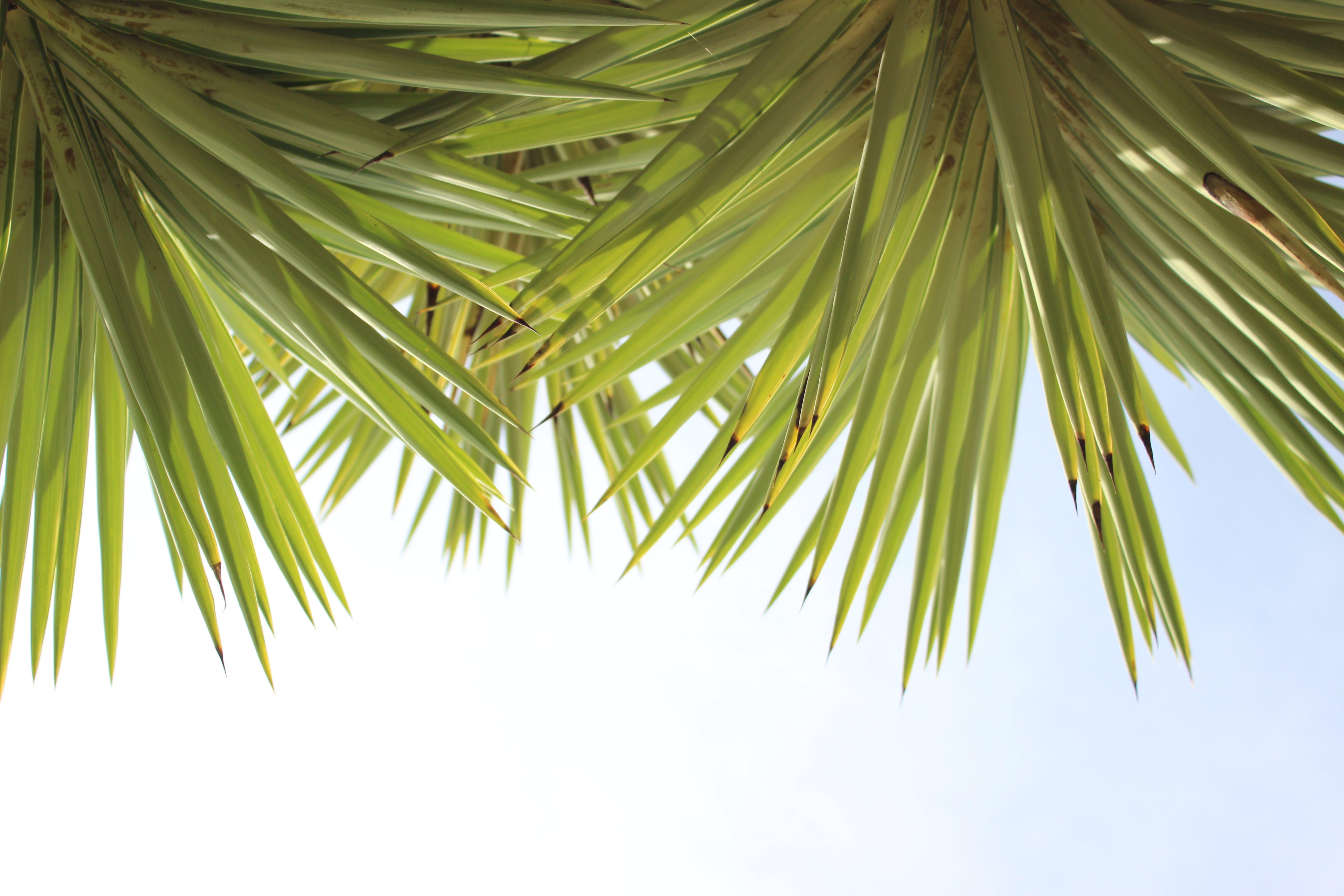 Gratis stockfoto met afzonderlijk, blauwe lucht, boom, evergreen