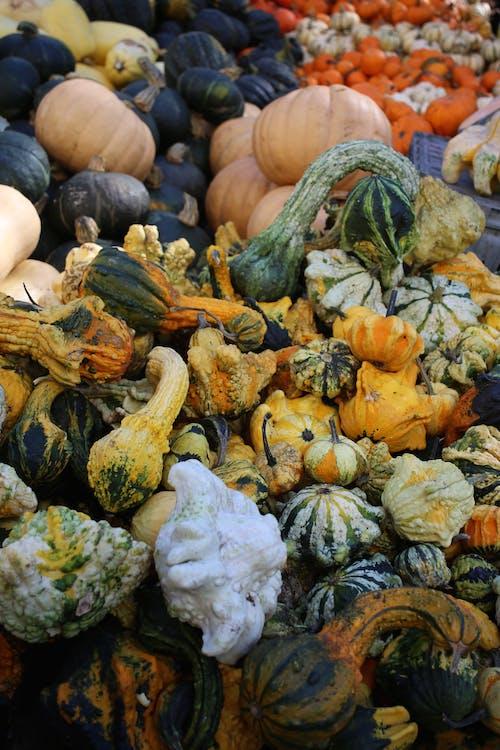Free stock photo of fruit, fruitandveg, gourds