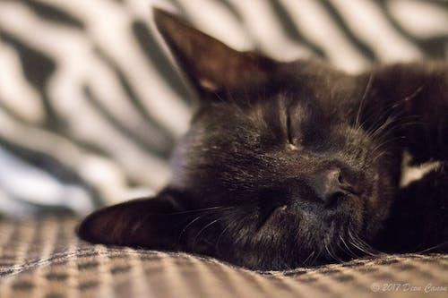 Fotos de stock gratuitas de adorable, animal, aterciopelado, bigotes