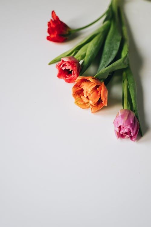 Darmowe zdjęcie z galerii z bukiet, bukiet kwiatów, bukiety kwiatowe