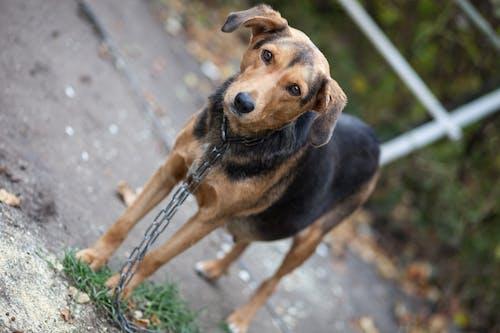 Kostenloses Stock Foto zu geretteten hund, hund, streunender hund, tierrettung