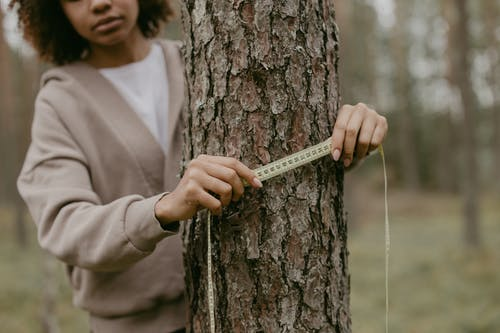 A Woman Measuring A Tree Trunk