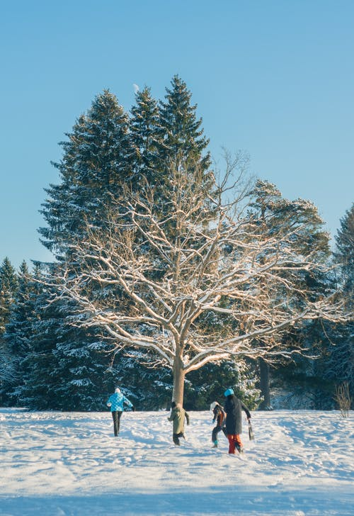 Man and Woman Standing Near Trees