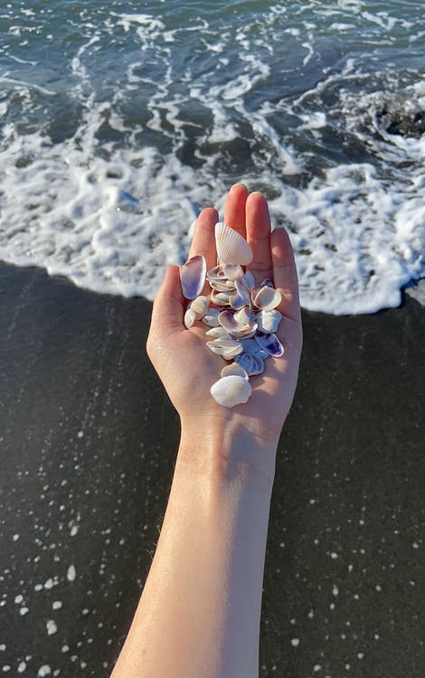 From above of anonymous person with heap of small seashells on hand standing on wet coast near waving sea during summer vacation