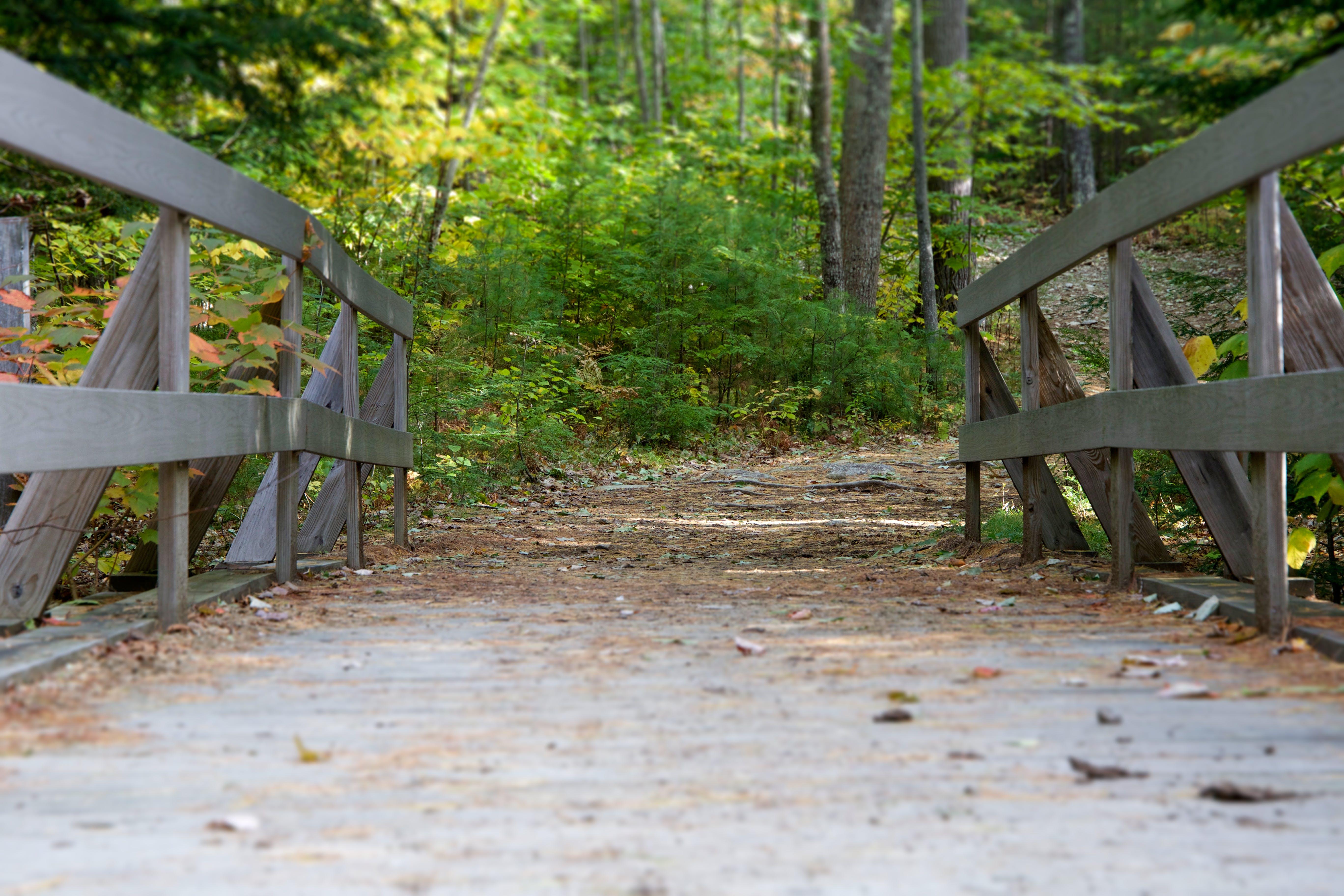 bridge, forest, nature