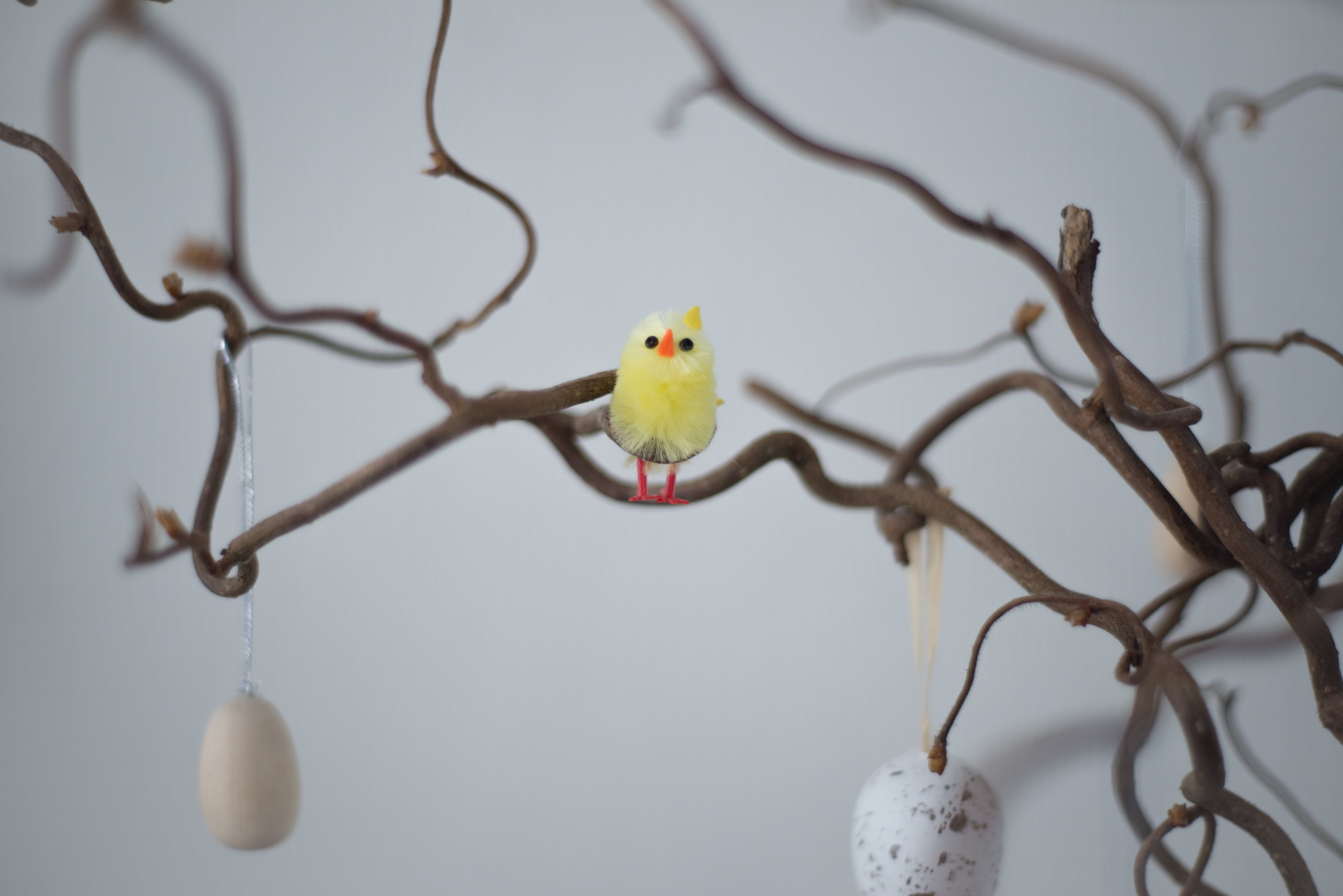 Free stock photo of holidays, easter, chicken, eggs