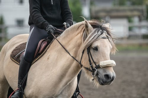 Person Riding On A White Horse