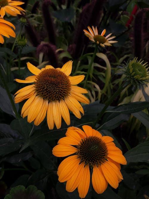 Kostnadsfri bild av anläggning, blomma, blomning