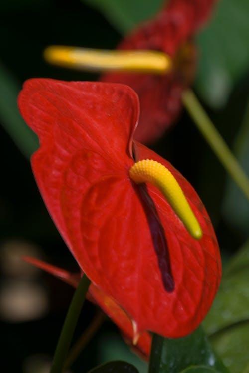 Free stock photo of cove, flower, garden flower