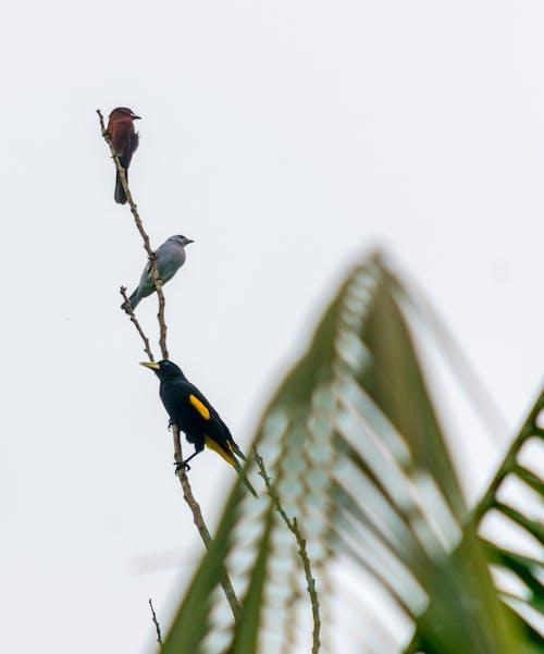 Photos gratuites de animal, arbre, aviaire