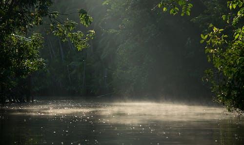 Photos gratuites de bain de soleil, brouillard, faisceau de lumières