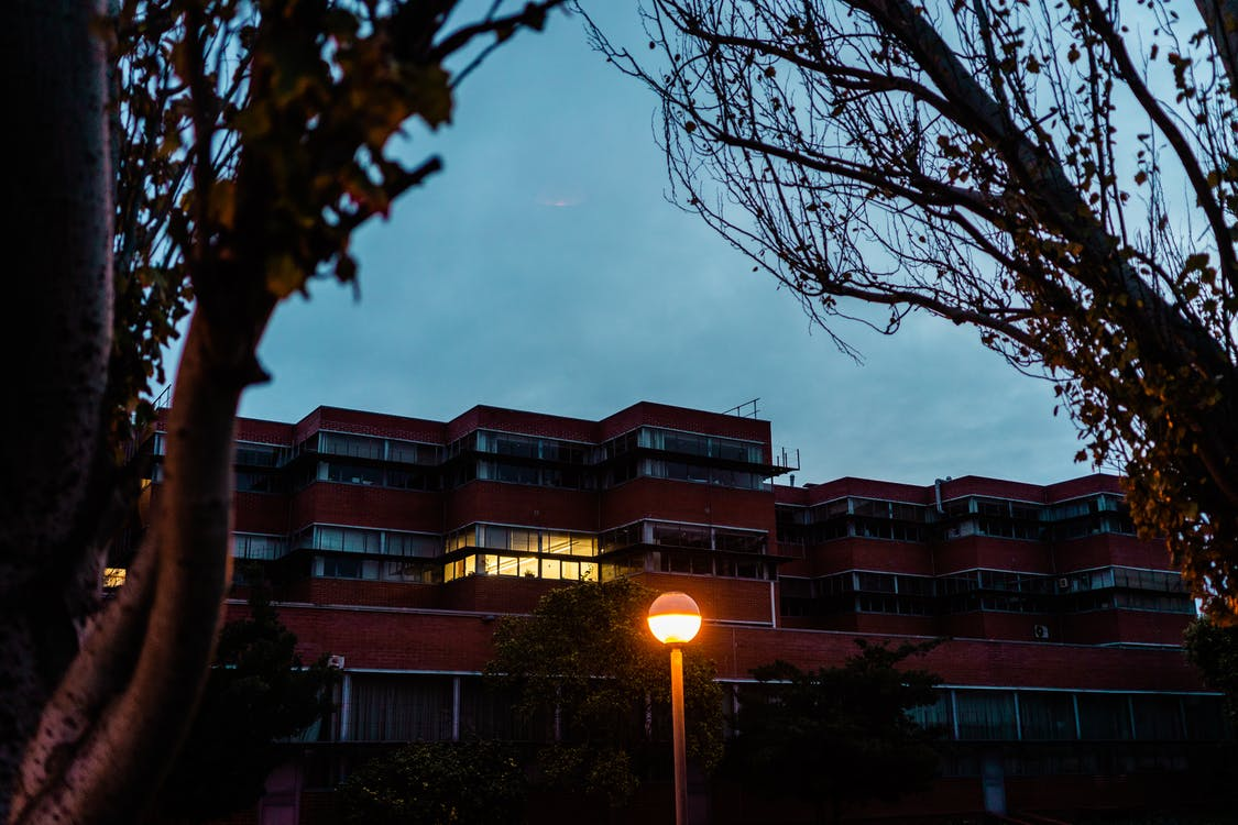 Low angle view from silhouettes of trees on multistory building and luminous lamp in dark evening