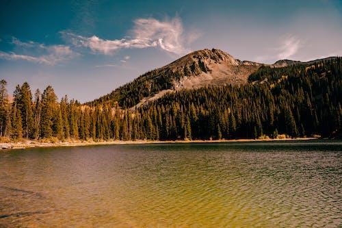 Free stock photo of dawn, fall, lake