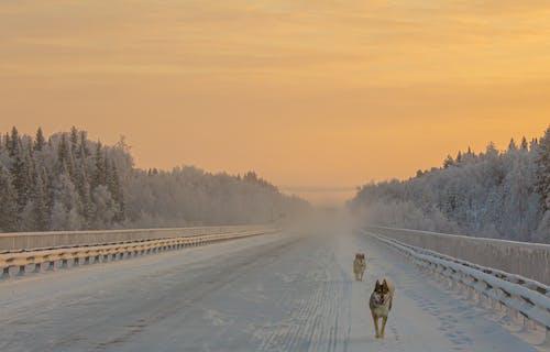 Free stock photo of bridge, cold, dawn