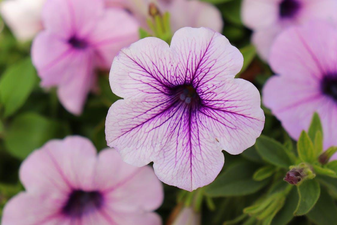 คลังภาพถ่ายฟรี ของ ดอกไม้, สลัว, สวน