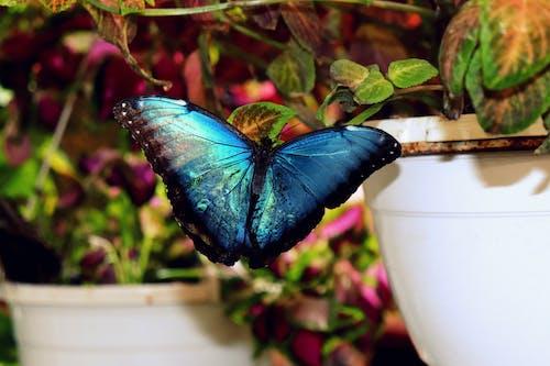Ảnh lưu trữ miễn phí về cánh, Con bướm, màu sắc
