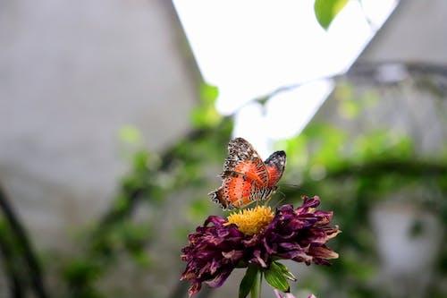 Ảnh lưu trữ miễn phí về Con bướm, hoa, màu sắc