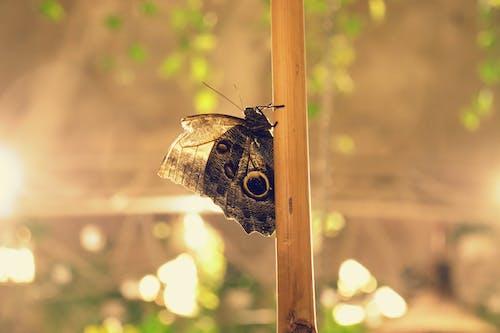 Ảnh lưu trữ miễn phí về ánh sáng, Con bướm