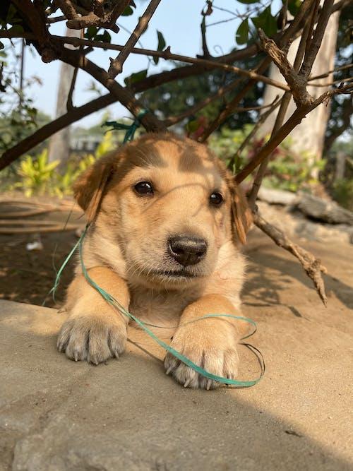 Free stock photo of baeutiful eyes, cute puppy, dogs