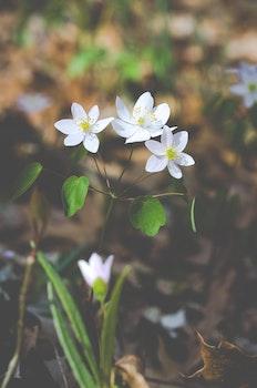 Free stock photo of nature, garden, plant, flower
