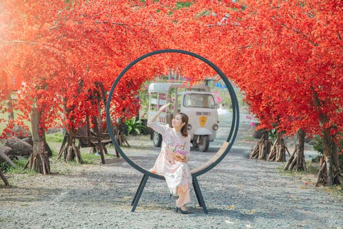 Free stock photo of beautiful, color, fall