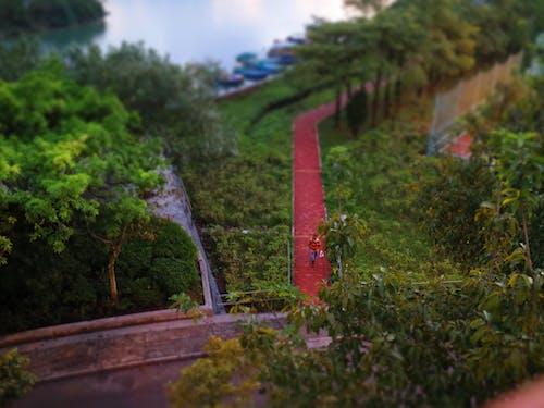 Foto stok gratis jalan kecil, jalan setapak, orang, pohon