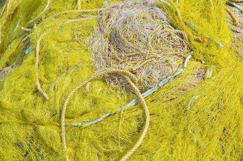 Free stock photo of yellow