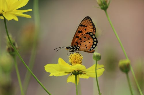 A Butterfly Pollinating on a Flower