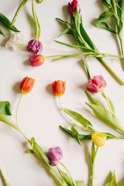 Darmowe zdjęcie z galerii z bukiet, bukiet kwiatów, czas wiosny
