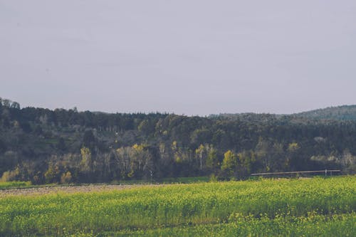 Ilmainen kuvapankkikuva tunnisteilla kentät, metsä, pilvinen, puut