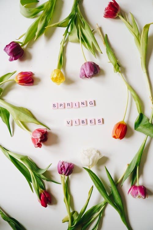 Foto profissional grátis de buquê de flores, colorido, conhecimento
