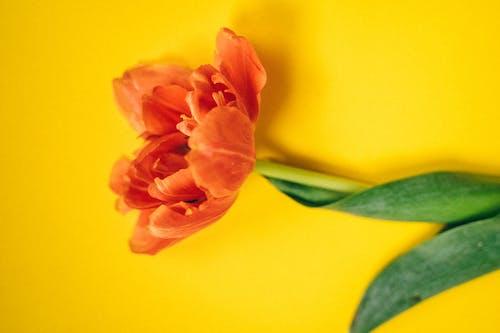 arka fon, arka plan, Bahar çiçeği içeren Ücretsiz stok fotoğraf