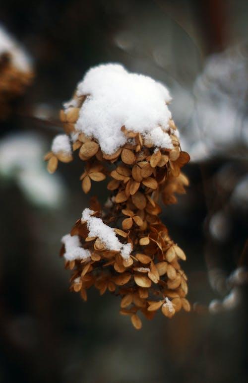 Free stock photo of beautiful flower, beautiful nature, blur